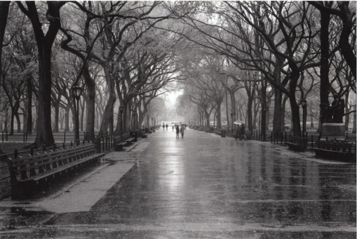 Rainy Day, Central Park